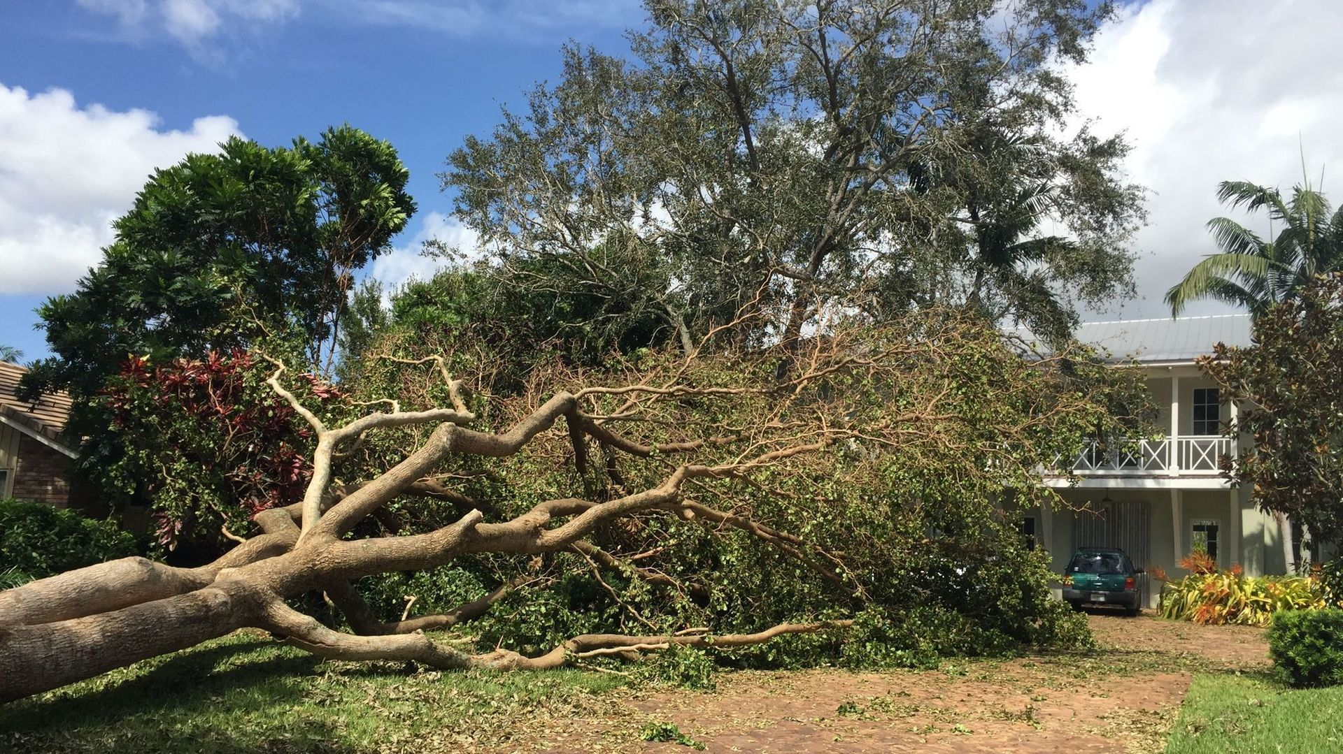 Hire the Right Tree Removal Company For the Job