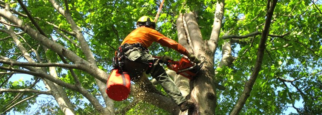 How to Prune a Tree by Tree Pruning Experts?