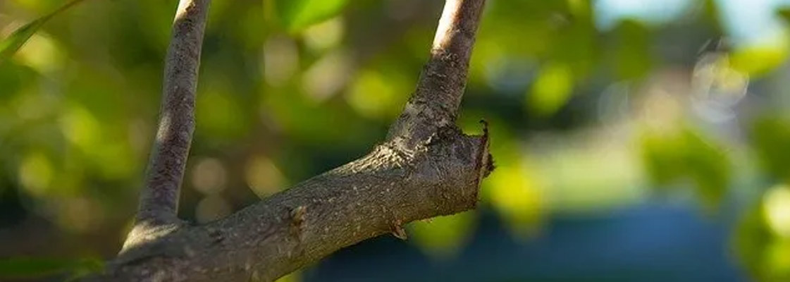 Key Points for Proper Pruning