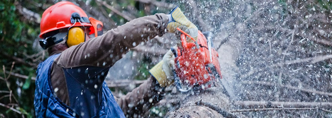 Top 10 Reasons to Remove a Tree By Tree Removal Adelaide – CTL Services