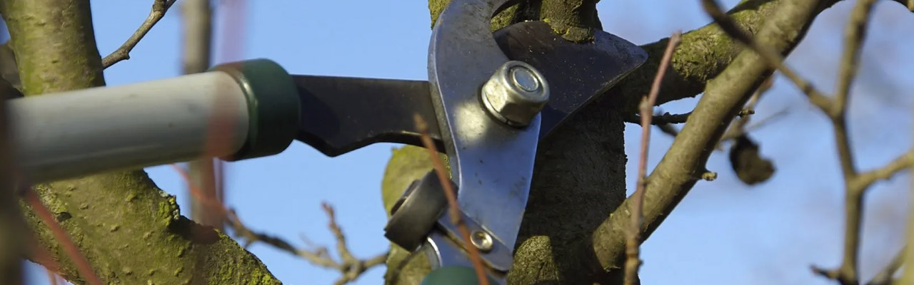 What Are The Major Benefits Of Tree Pruning?